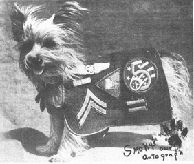 Smoky_Yorkie_uniform