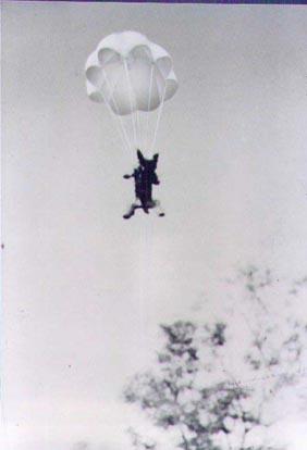 Smoky_yorkie_parachute