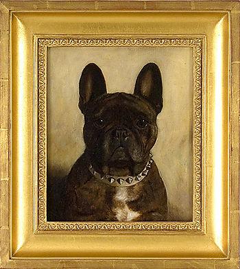 Monica_gray_french_bull_dog