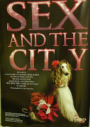 Sex_and_city_afghan_dog_1