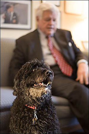 Ted_kennedy_portuguese_water_dog