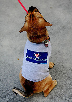 Dogs_for_obama_puggle