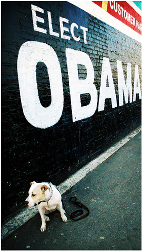 Dogs_for_obama_pitbull