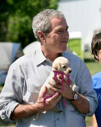 George_Bush_puppy