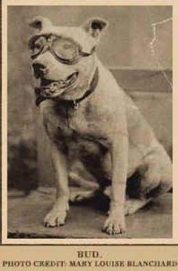 Bud_transcontinental_dog