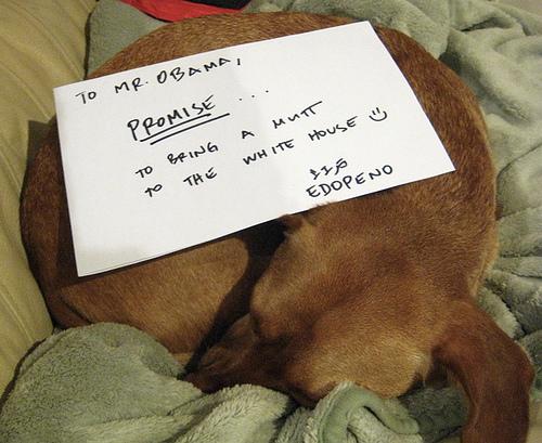 Obama_dog_message