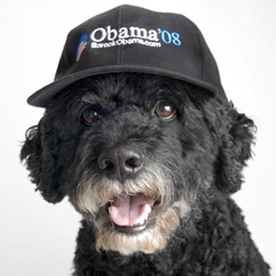 Portuguese_water_dog_obama