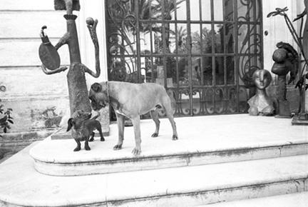 Picasso_boxer_dachshund
