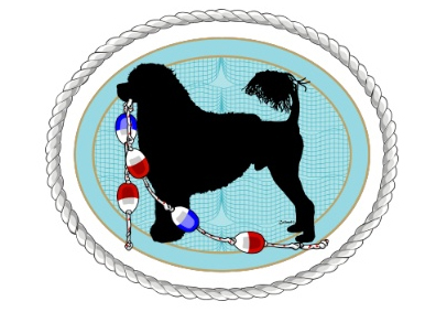Portuguese_water_dog