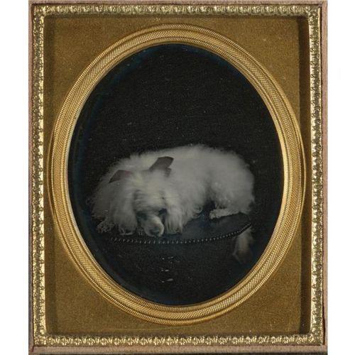 Vintage_poodle_photograph