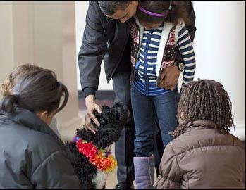 Bo_obama_puppy