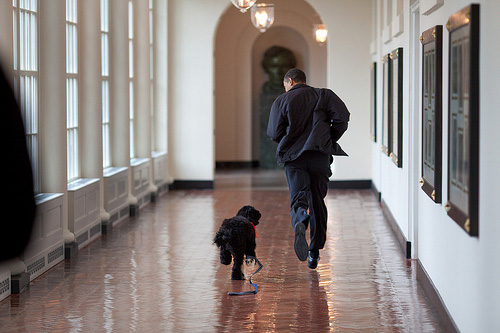 Barack_obama_bo_running