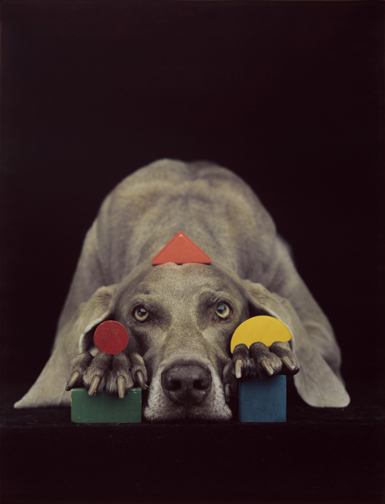 William_wegman_fay_1
