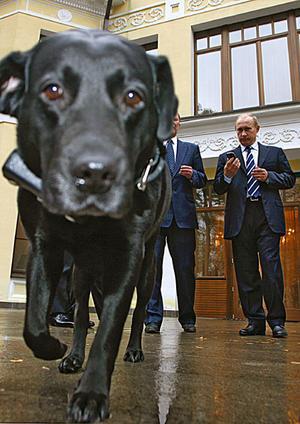 Vladimir_putin_dog