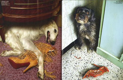 Dogs_eat_shoes_1