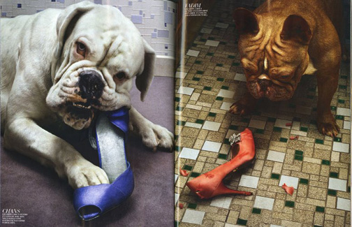 Dogs_eat_shoes_2