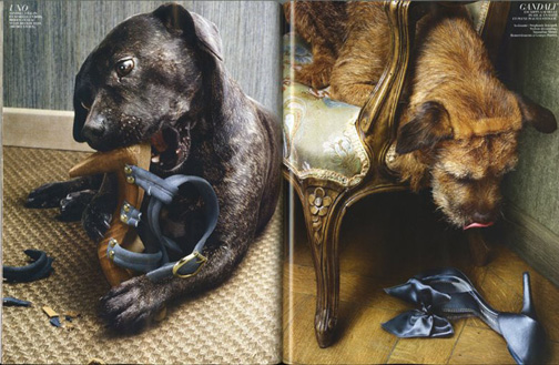Dogs_eat_shoes_3