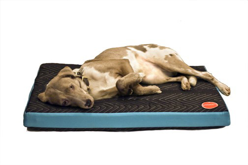 Project71_dog_bed