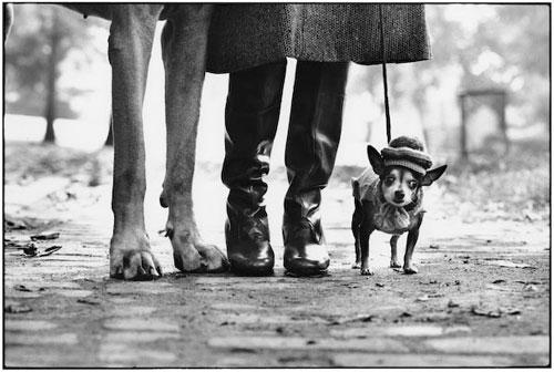 Elliott_Erwitt_Photo_Dog_Legs_New_York_City_1974-1