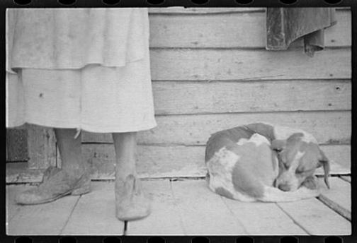 Great_depression_dog_1