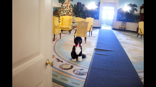 Bo_obama_christmas_tree_photo
