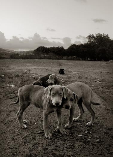 Traer_scott_street_dogs_2