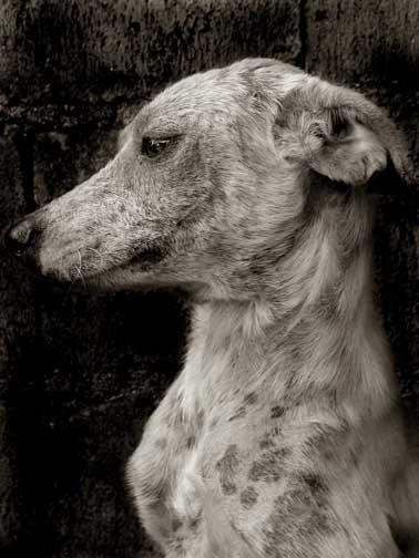 Traer_scott_street_dogs_5