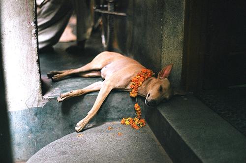 Slum_dog_leyden_6