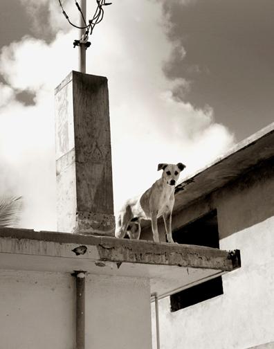 Traer_scott_street_dogs_3