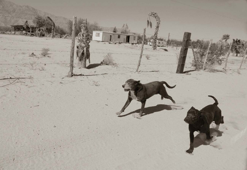 Traer_scott_street_dogs_4
