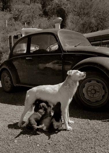 Traer_scott_street_dogs_6