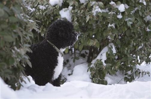 Bo_snow_1