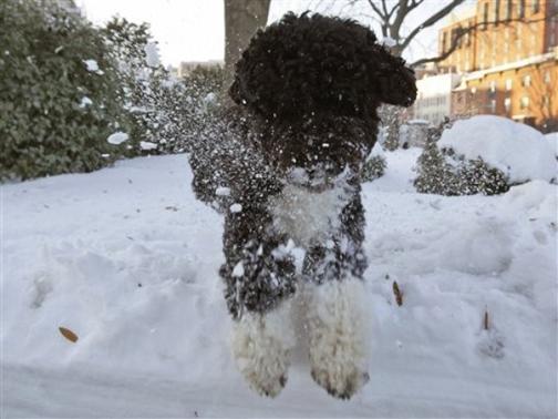 Bo_snow_2