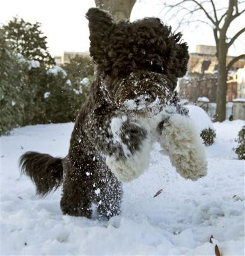 Bo_snow_3