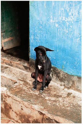Slum_dog_leyden_7