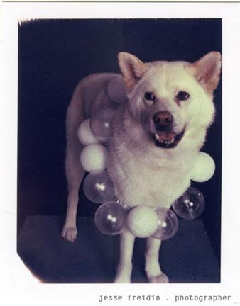 Doggiegaga12awp