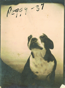 Photobooth_dogs_2