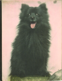 Photobooth_dogs_9
