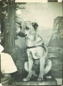 Photobooth_dogs_4