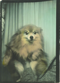 Photobooth_dogs_8
