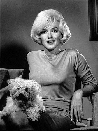 Marilyn_monroe_maf_dog_1