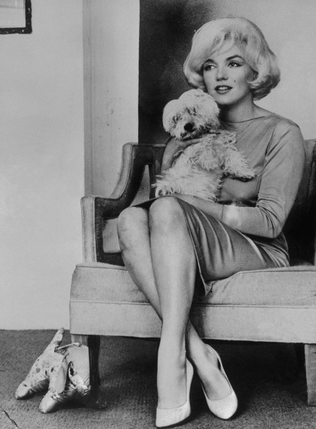 Marilyn_monroe_maf_dog_2