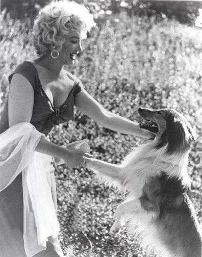 Marilyn_Monroe_Lassie_2