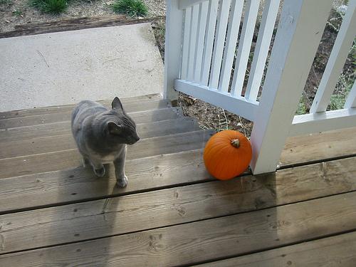 Bones_pumpkin