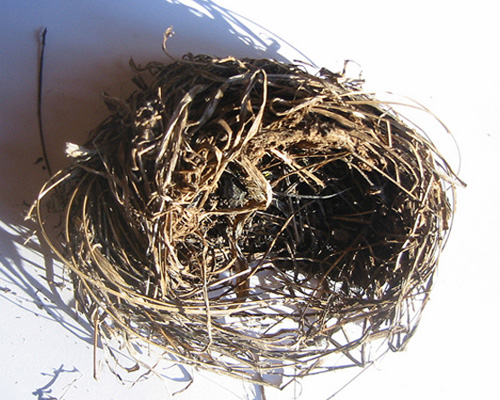 Birds_nest_post