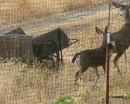 Deer_wheelbarrow