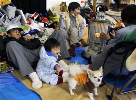 Japan_dog_earthquake_shelter