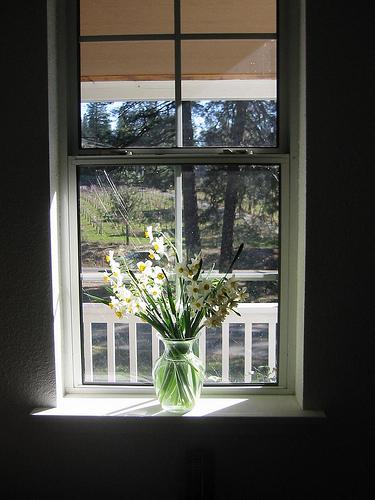 Narcissus_bouquet