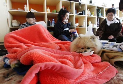 Japan_dog_earthquake_2