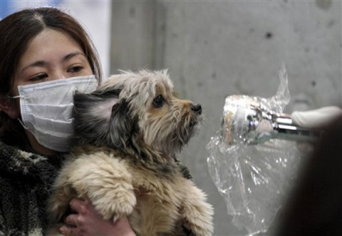 Japan_earthquake_dog_radiation